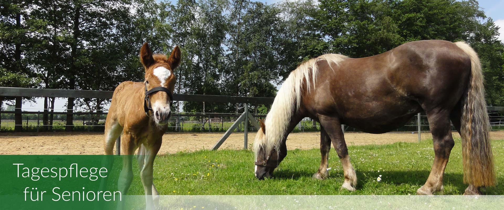pferde-landhaus-humanitas-bild